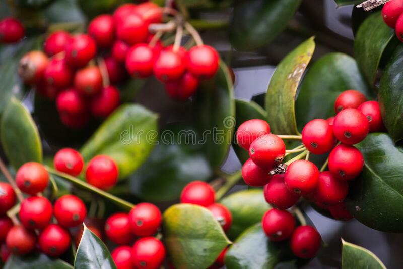 Close Up Photography of Red Round Fruit royalty free stock images