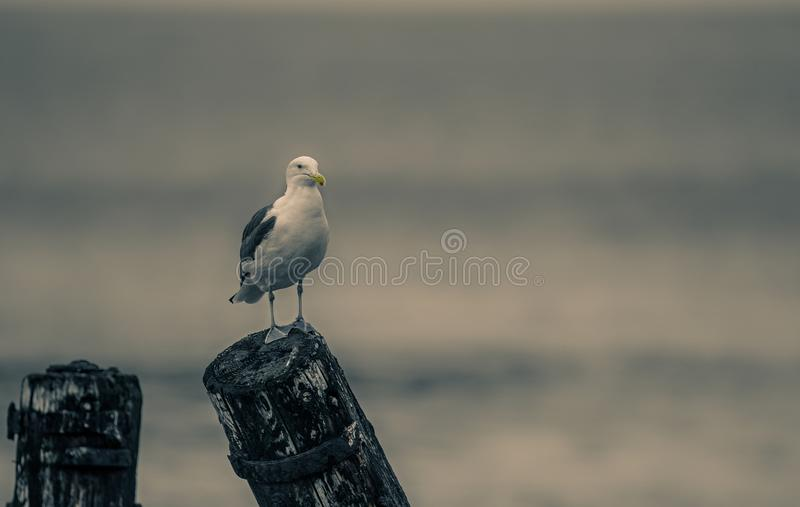 Close-Up Photography of Seagull stock photography