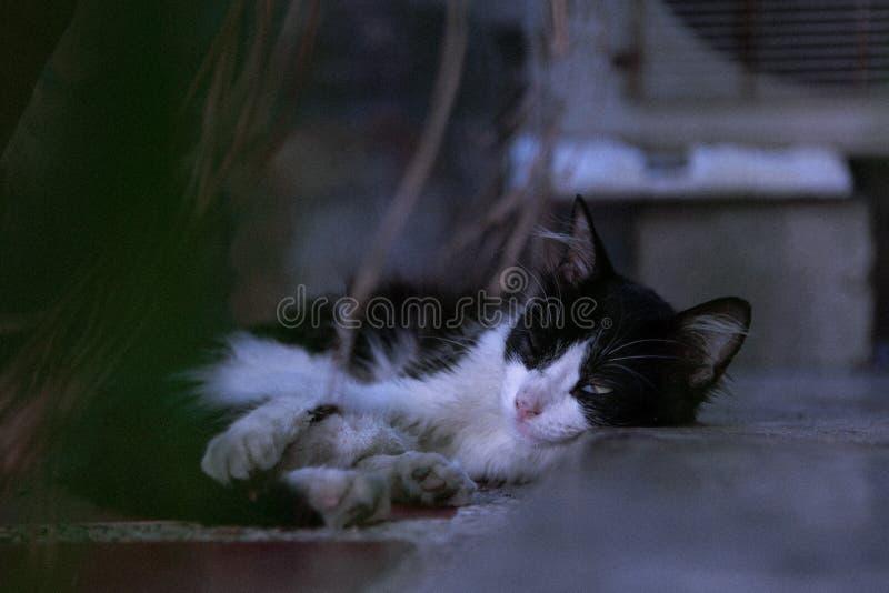 Close-Up Photography of Sleeping Cat stock photos