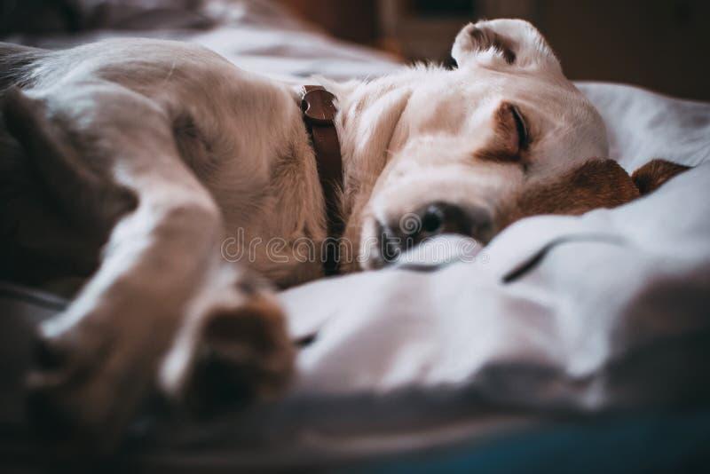 Close-Up Photography of Sleeping Dog stock images