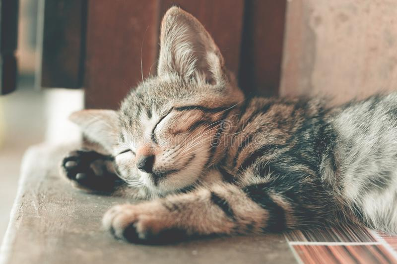 Close-Up Photography of Sleeping Tabby Cat royalty free stock image