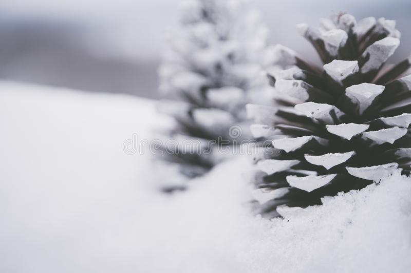 Close-up Photography Of Snow Capped Pinecones Free Public Domain Cc0 Image