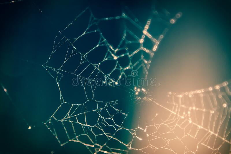 Close Up Photography Of Spider Web Free Public Domain Cc0 Image