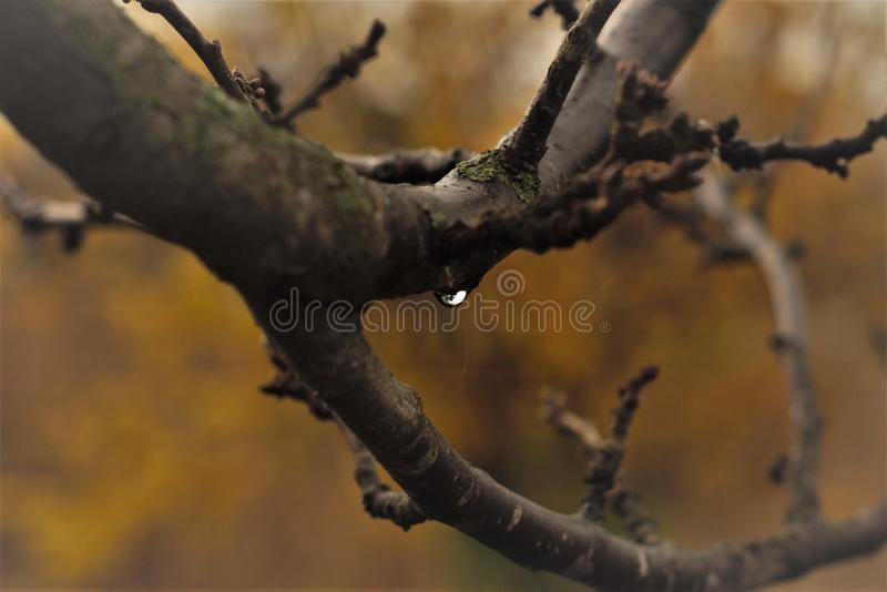 Close-Up Photography of Tree Branches royalty free stock images