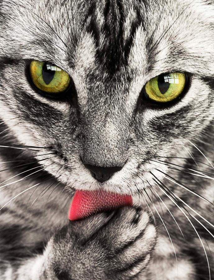Close Up Photography of White and Black Cat royalty free stock image