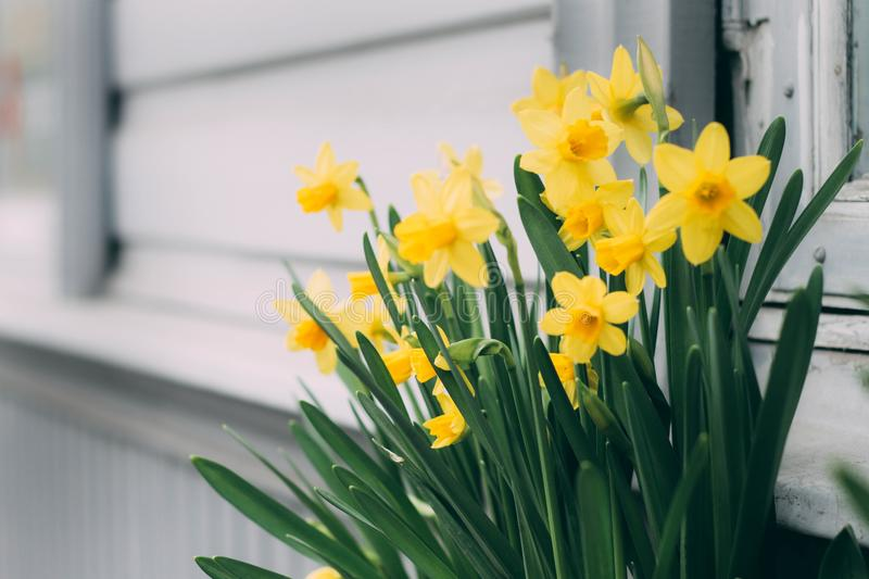 Close-Up Photography of Yellow Flowers stock images