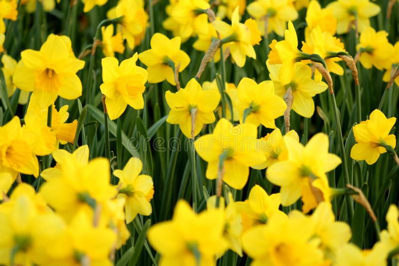 Close-Up Photography of Yellow Flowers stock photos