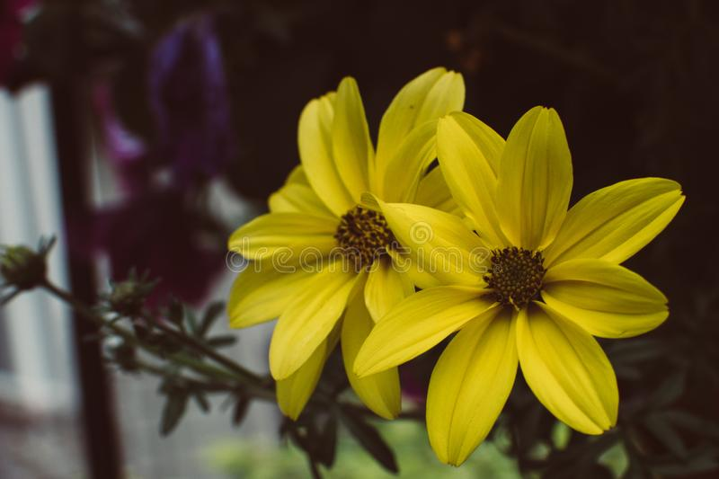 Close-up Photography of Yellow Petaled Flowers stock photography