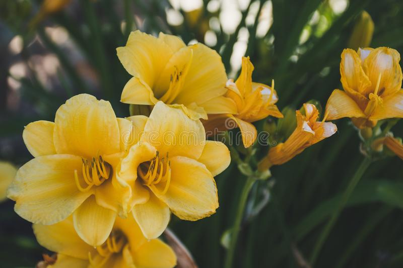Close-up Photography of Yellow Petaled Flowers stock photo