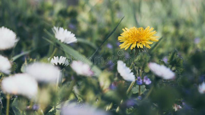 Close-Up Photography of Yellow And White Flowers royalty free stock photos