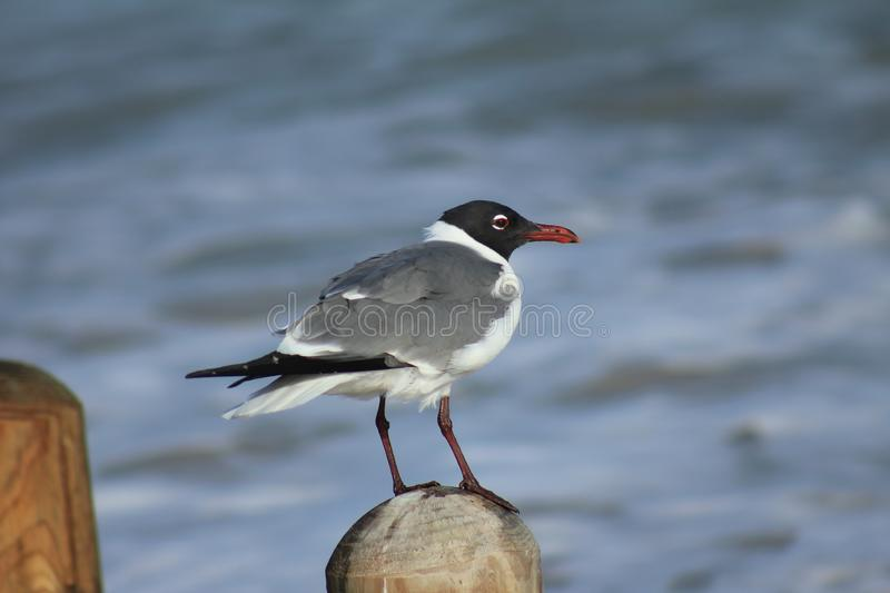 Close up picture of a bird standing alone on a post on the beach stock photos