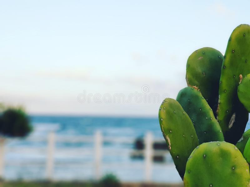 Close up picture of cactus stock images