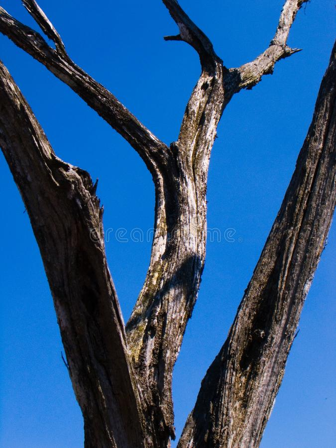 Dried wood against the sky. stock image