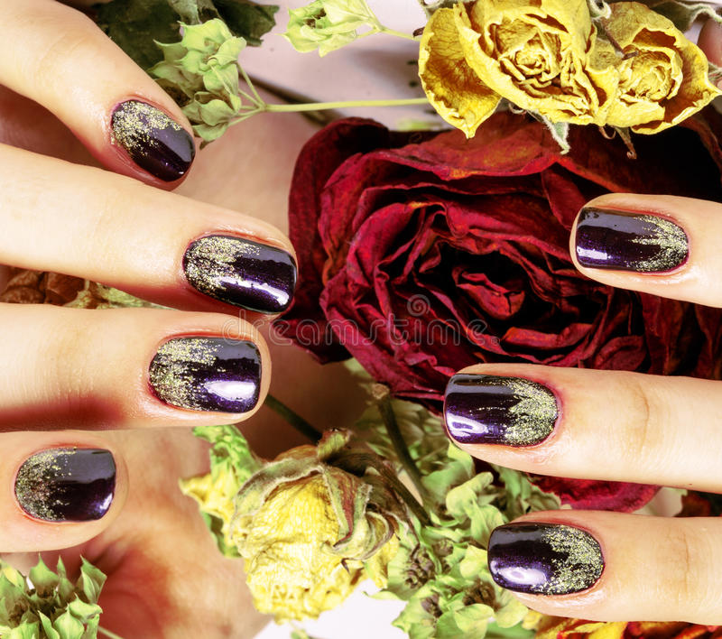 Close up picture of manicure nails with dry flower red rose, deh. Ydrated by winter cold royalty free stock photography