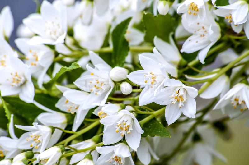 Small white flowers cascading down stock image image of nature download small white flowers cascading down stock image image of nature closeup 100209267 mightylinksfo