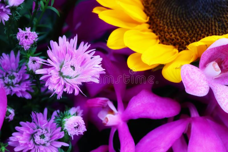 Close-up pictures of beautiful freshness of yellow and purple flowers, natural background. Red, green stock photography