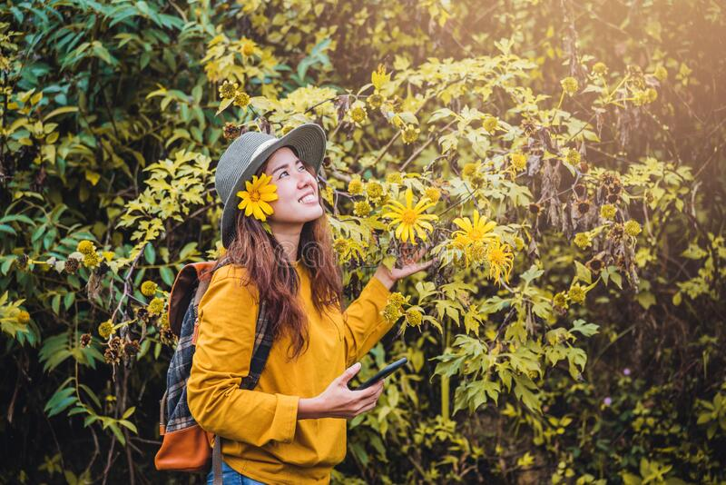 Close-up pictures of happy young women relaxing enjoying beauty Bua Tong yellow flower stock images