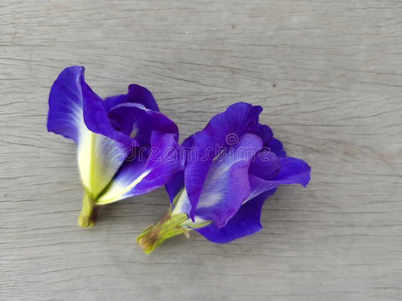 Close-up pictures of pea flowers on the clitoria ternatea wood board background . Close-up pictures pea flowers clitoria ternatea wood board background royalty free stock image
