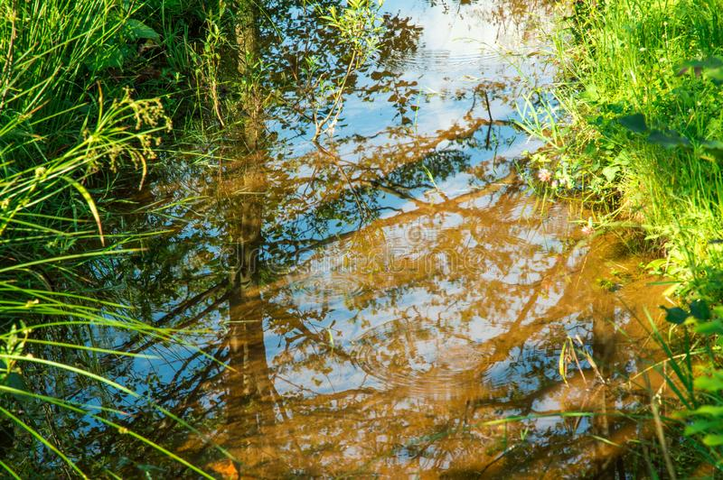 Close up. Picturesque creek, surrounded by meadow grasses. In the reflection you can see the blue sky stock images