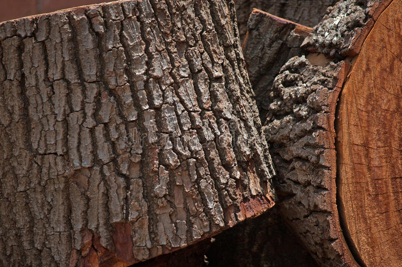 CLOSE UP OF PIECES OF LOG. Trunk of tree cut into logs royalty free stock image