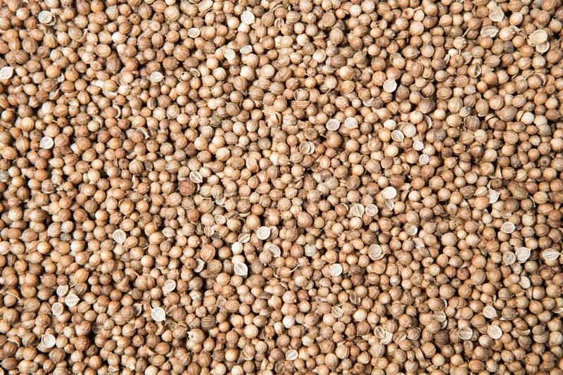 Close up pile of dried coriander seed royalty free stock photos