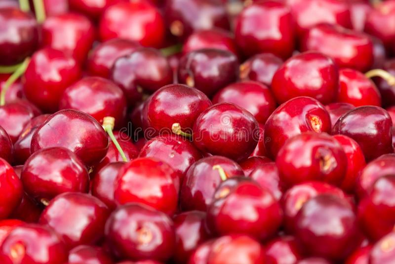 Close up of pile of ripe cherries with stalks. Large collection of fresh red cherries. Ripe cherries background royalty free stock photography