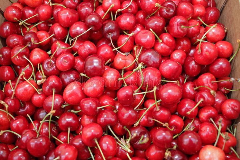 Close up of pile of ripe cherries with stalks. Large collection of fresh red cherries. Sweet organic red cherries. Cherry on a far stock photos