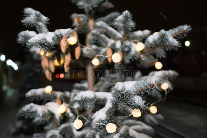 Close up of a pine cone or fir cone in a conifer tree at a Christmas tree farm with a garland of lights royalty free stock photos