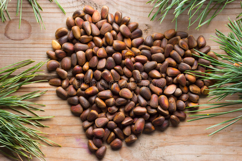 Close up of the pine nuts. Pinus koraiensis. A close up of the pine nuts and christmas tree branches stock photos