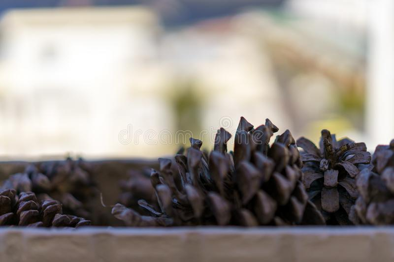 Close up of pine tree cone on a balcony. royalty free stock photos
