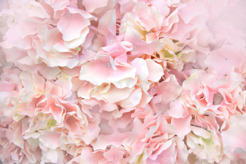 Close up Pink Artificial Flowers soft light abstract background stock photography