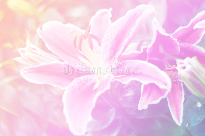 Beautiful abstract sweet color of floral with pink flower buds, pastel color style for background. stock photos
