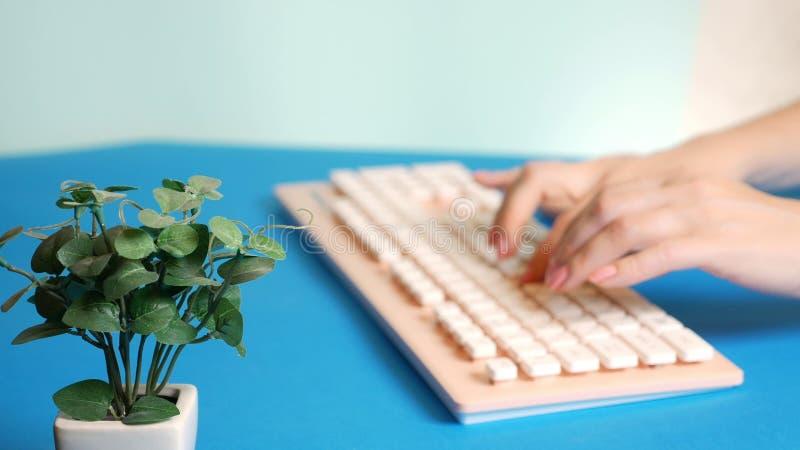 Close-up placa de v?deo de cumprimento ? moda as m?os f?meas est?o datilografando em um teclado cor-de-rosa, ao lado de uma flor  foto de stock