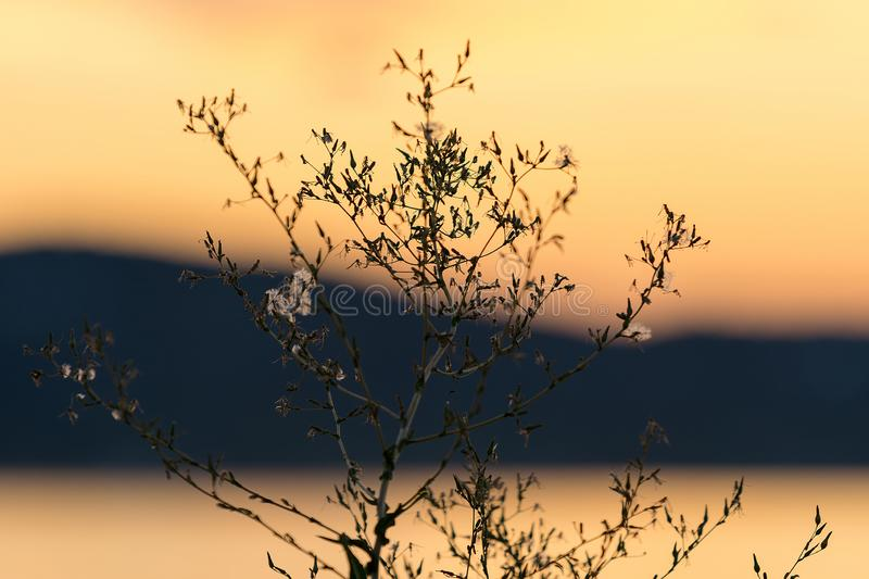 Close-up of a plant against an orange tinted sunset. Close up of a plant against an orange tinted sunset stock photography