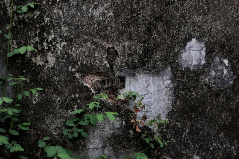 Close-up of plant growth on cracked and mossy old cement walls. Incredible background with open space for text or as a vintage, urban or grunge background royalty free stock photo