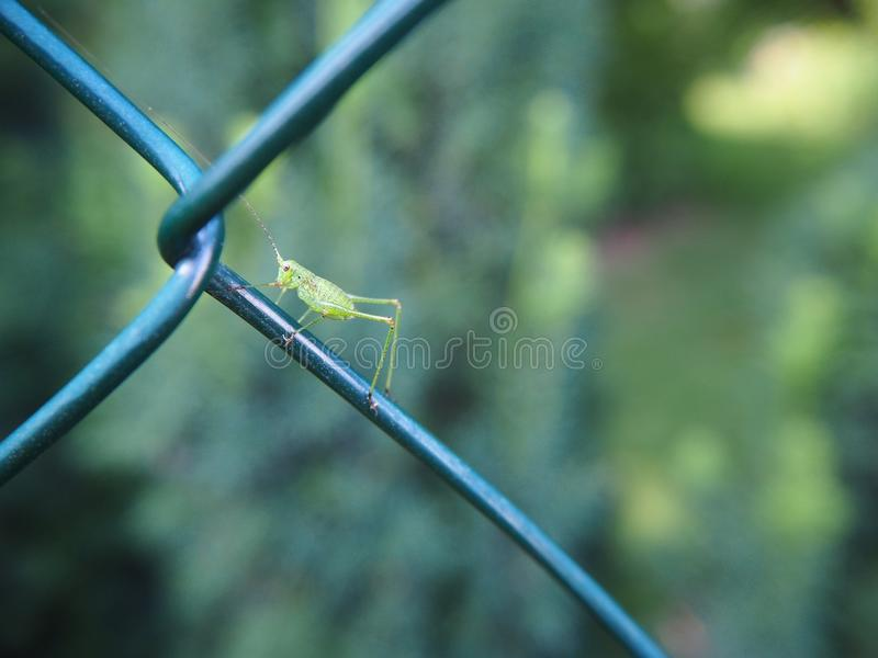 Close Up, Plant Stem, Insect, Grass royalty free stock photo