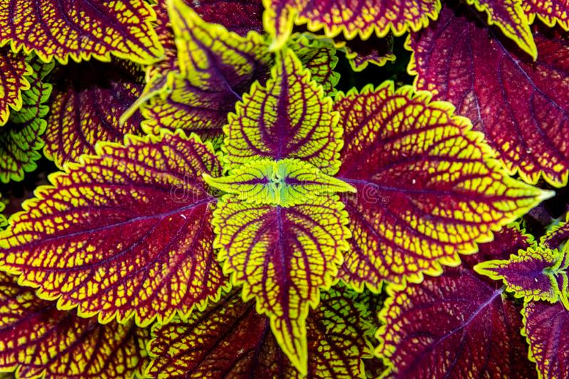 Close-up plants growing in the shadow. Close-up photography, Canada, Quebec stock photos