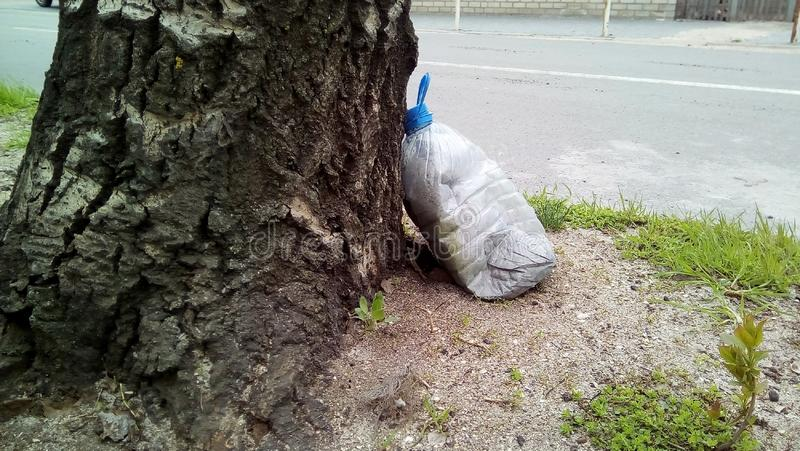 Close-up with a plastic container near the tree. stock photos