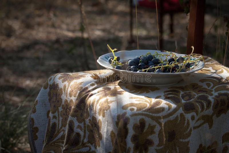 Close-up a plate with branch with wild blue grapes, selective focus stock images