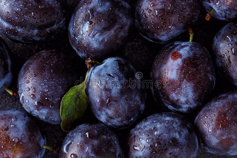 Close up of plum on dark stock photography