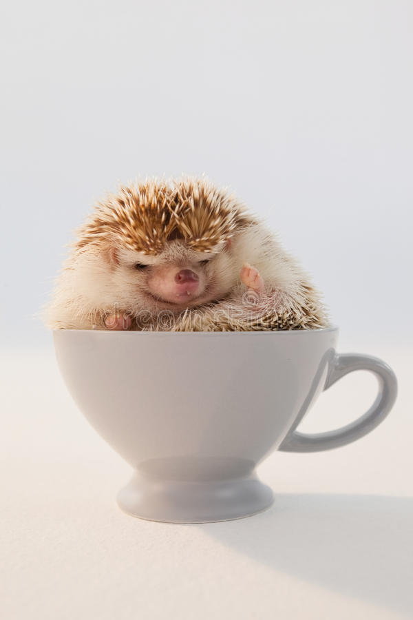 Close-up of porcupine in cup stock images