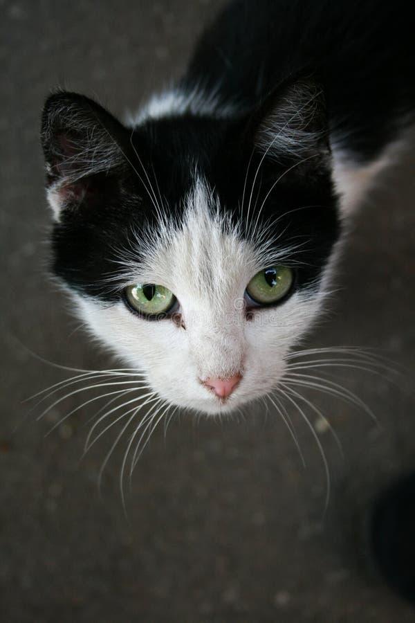 Close-up Portrait of Cat stock photos