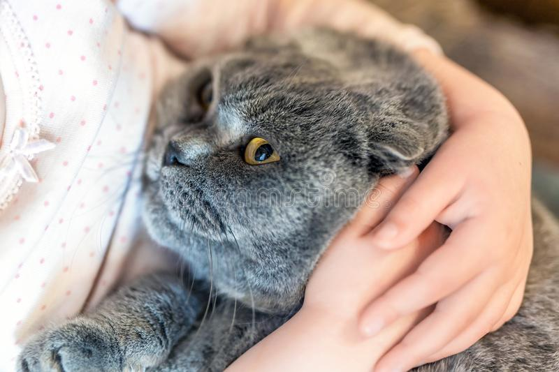 Close-up portrait of cat being hugged by child. Kitten patience. Best friends. Pet care stock photos