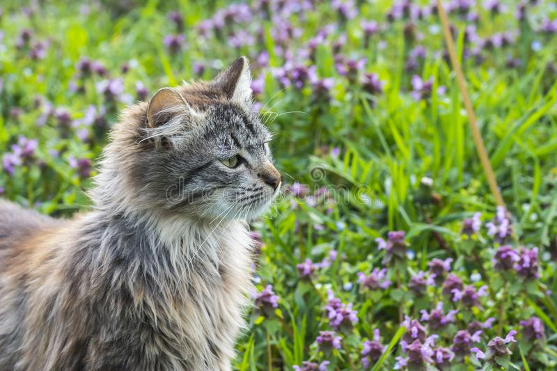 Close up portrait of cat on green background whit flowers. Young cute male cat looking away Cat walking outdoors royalty free stock images