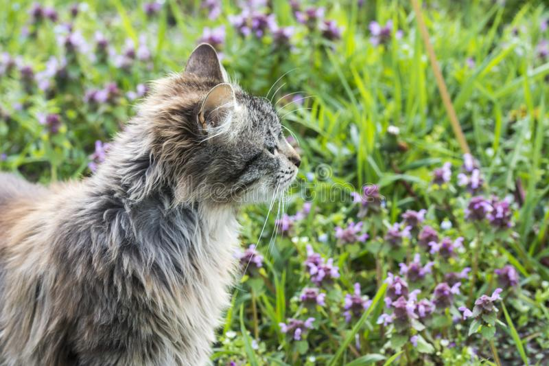 Close up portrait of cat on green background whit flowers. Young cute male cat looking away Cat walking outdoors stock photos