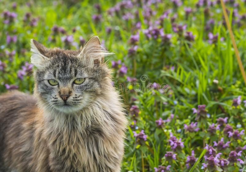 Close up portrait of cat on green background whit flowers. Young cute male cat looking away Cat walking outdoors stock photo