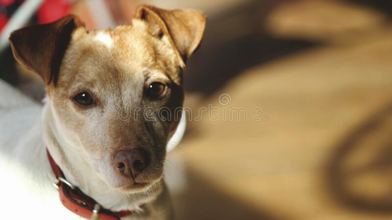 Close-up Portrait of Dog royalty free stock photos