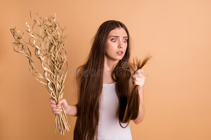 Close-up portrait of her she nice-looking attractive desperate nervous grumpy lady holding in hand dried flower messy. Close-up portrait of her she nice-looking royalty free stock images