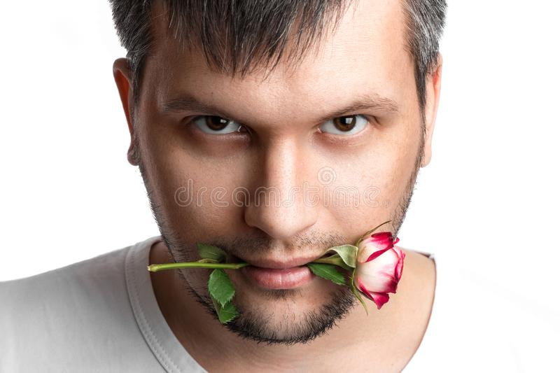Close-up portrait of a man`s face with a rose in his mouth on a white background. Close-up royalty free stock images
