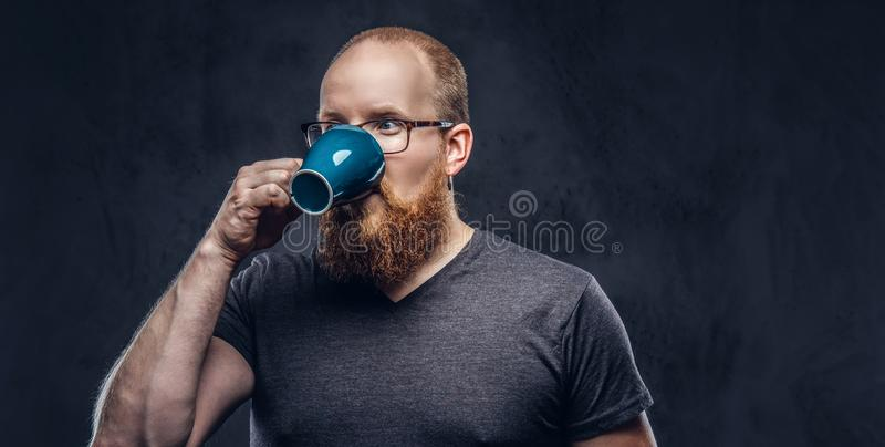Close up portrait of a redhead bearded male drinks coffee wearing glasses dressed in a gray t-shirt, isolated over a. Close up portrait of a redhead bearded male stock photo